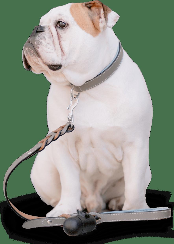 dog-walker-15