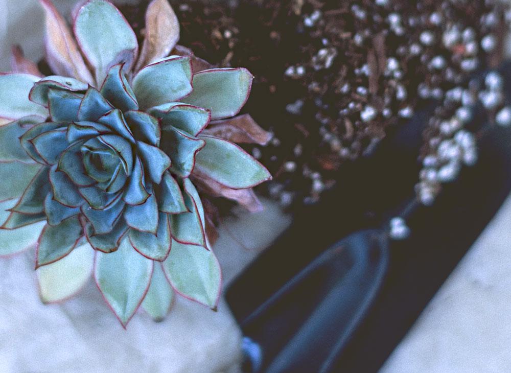 gardener-06