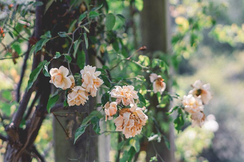 gardener-14-1